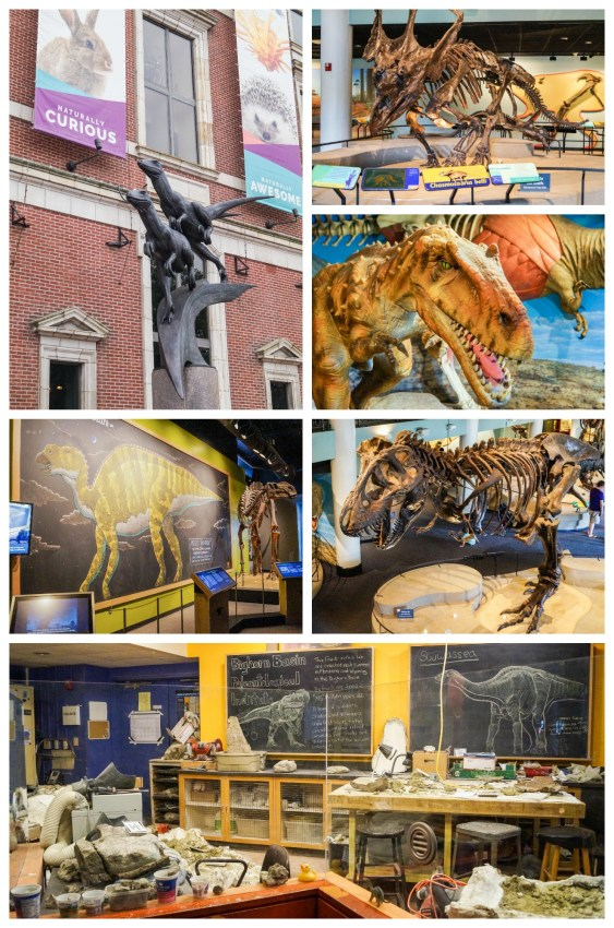 Dinosaur models and Fossil Prep Lab at The Academy of Natural Sciences