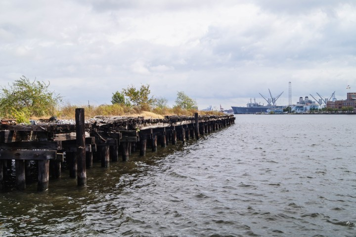 Overgrown pier and view of the water from Fells Point- Baltimore, Maryland.