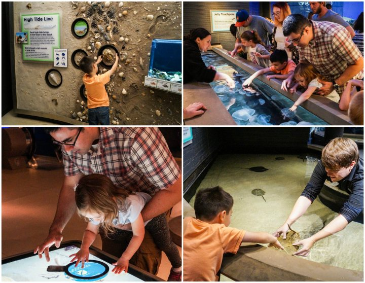 Collage of touching the hands-on exhibits at the National Aquarium.