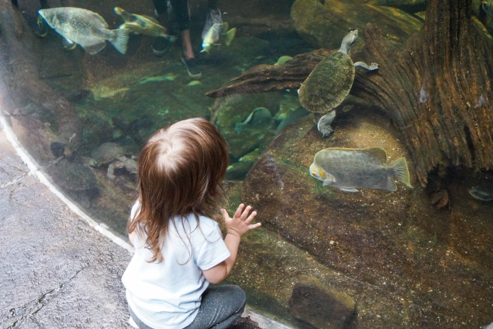 Small girl watching the turtle and fish at the National Aquarium.