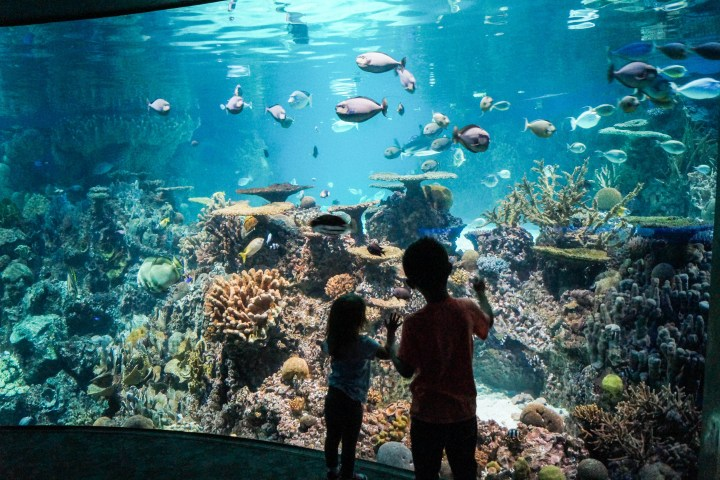 Standing in front of the Indo-Pacific Reef tank at the National Aquarium.