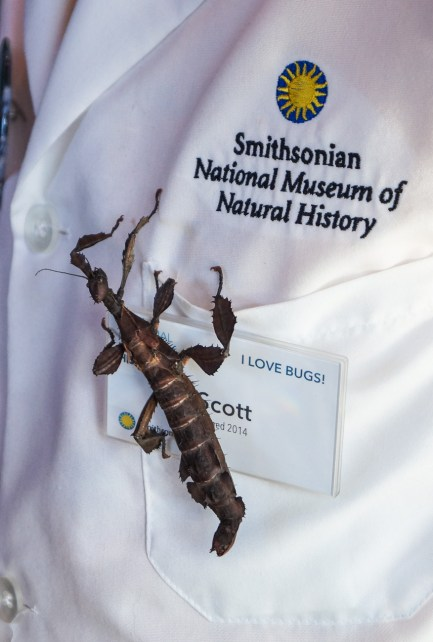 "Spiny Leaf Insect on a name tag reading ""I Love Bugs"" in the O. Orkin Insect Zoo at the Smithsonian National Museum of Natural History"