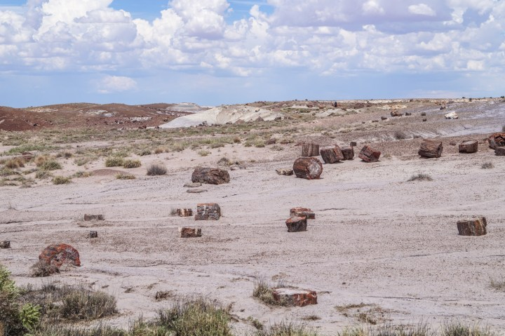 Petrified wood pieces at the Petrified Forest National Park