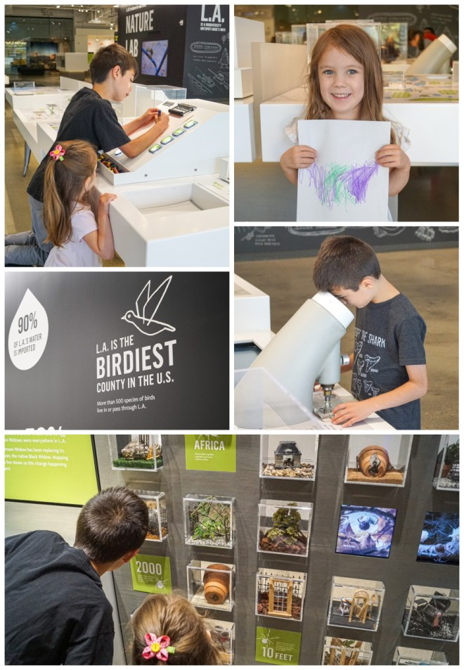 Five photo collage of the Nature Lab in the Natural History Museum with drawing station and black widow exhibit.