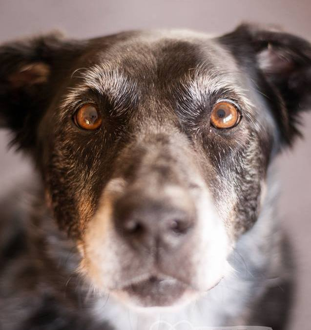 Pet Photography Tips: Focus on the Eyes