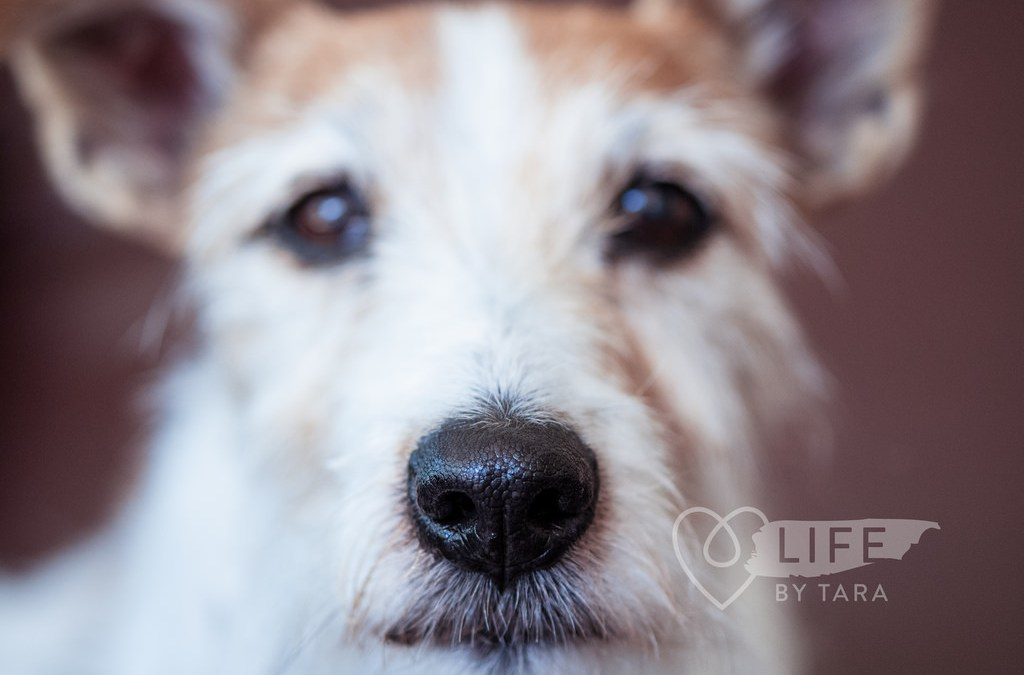 Pet Photography Tips: Backgrounds are as important as the Subject