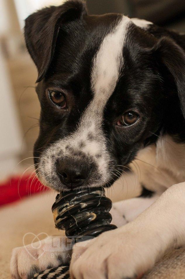 tarasutherland-nixielix-puppy