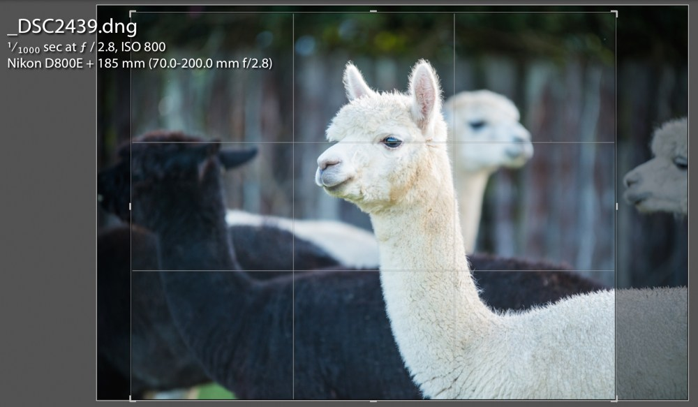 tarasutherland-photographigyouralpaca-Rule of Thirds - Screenshot