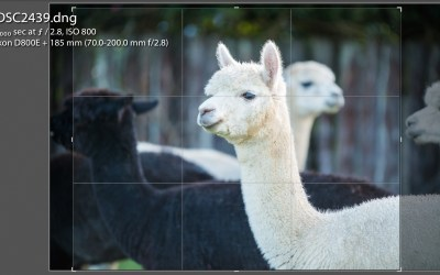 How To: Taking Photographs of Your Alpaca