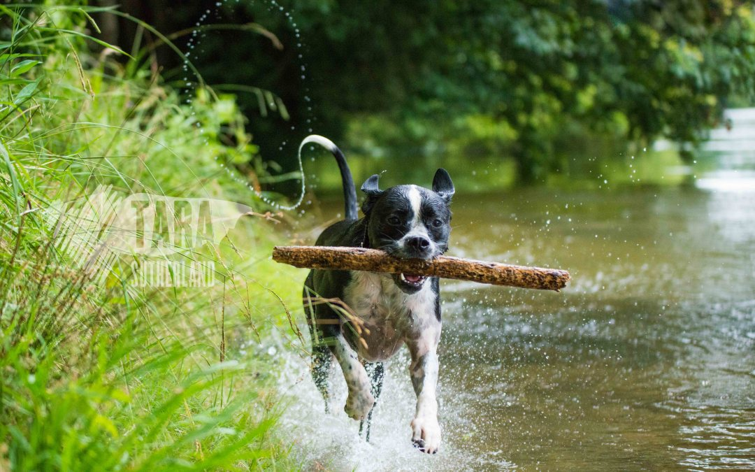 Pet Photography Project 52: 4 – The Zone System