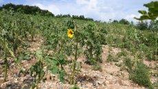 Selde Zarar Gören Köylere Tohum Desteği Yapılacak