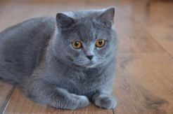 İngiltere'de İlk Defa Evcil Hayvanda Kovid-19 Tespit Edildi