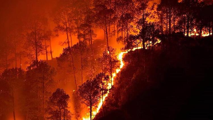 Toprağın Nemini Ölçen Teknoloji İle Orman Yangınları Önlenecek