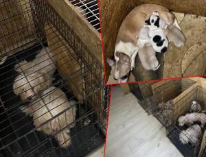 İşte Ankara'daki Köpek Vahşetinin Raporu: Ses Telleri Dağlanmış