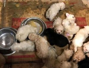 Tıka Basa İstiflenen 23 Yavru Köpek Ele Geçirildi