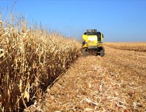 Tarım Bünyesindeki 10 Sektörün 8'iyle İhracatta Atağa Kalktı