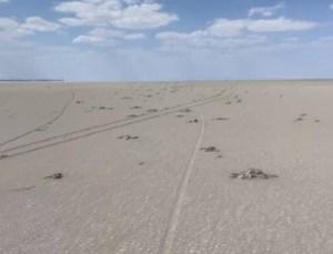 Tuz Gölü'nde Yüzlerce Flamingo Ölü Bulundu