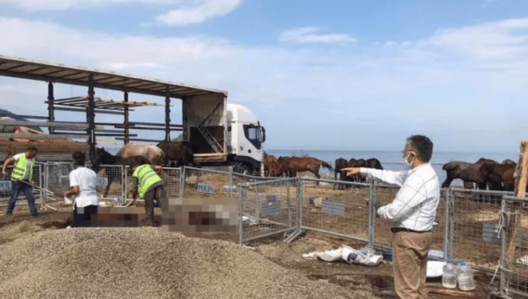 Ölüme Terk Edilen Atlara Vatandaş ve Sanatçılar Sahip Çıktı