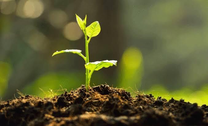 Yanan Ormanların Yeniden Yeşillendirilmesi İçin Fidan Bağışı Yaptılar