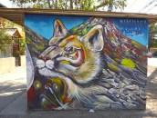 Mountain wildlife: puma