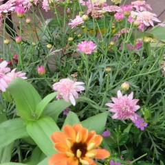 Zinnia, Marigold, and more annuals make for great deck boxes.