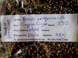 Mt Hickory Seed