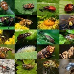 insects-pictures