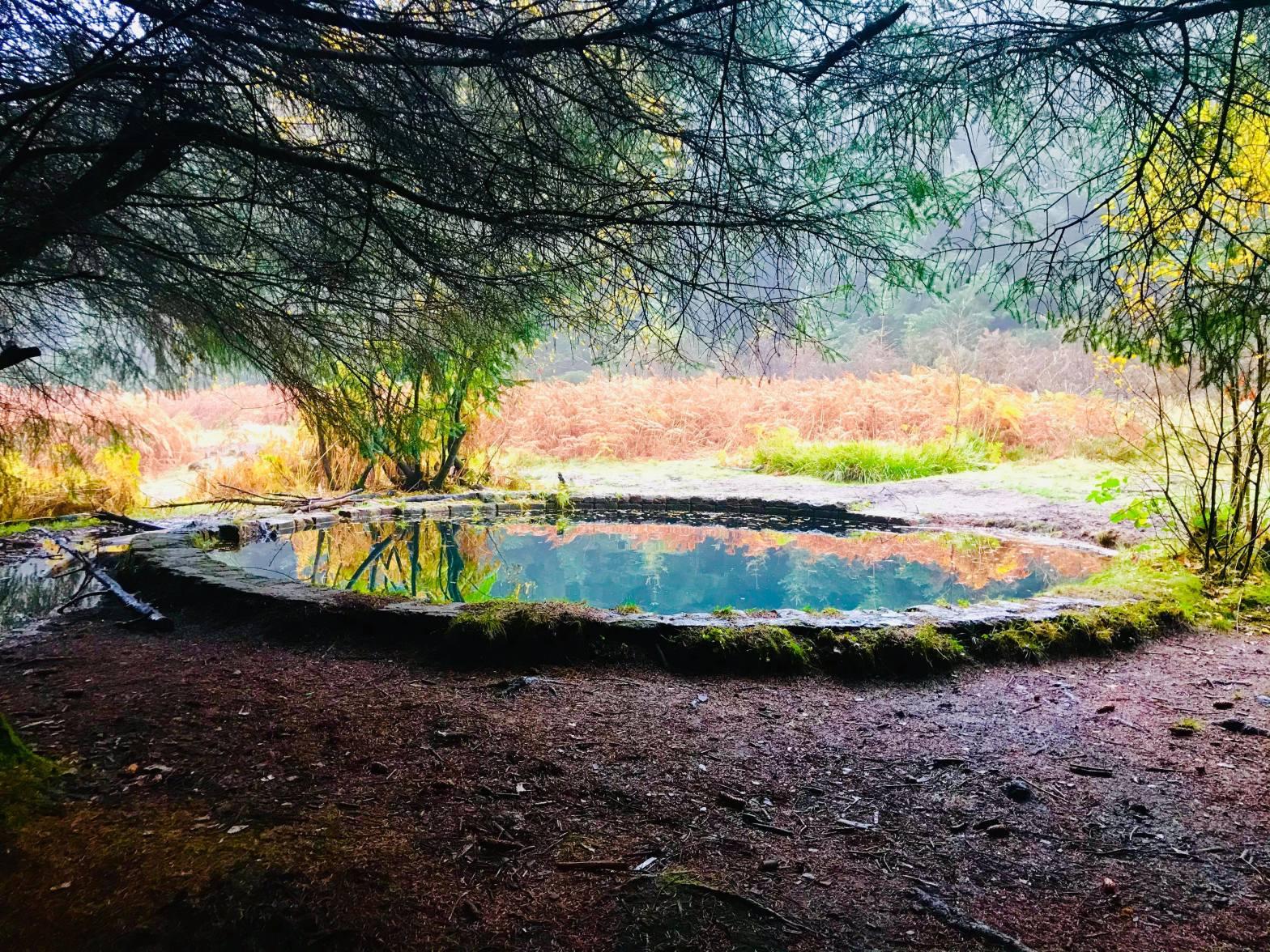 Blue round pool at Torwood