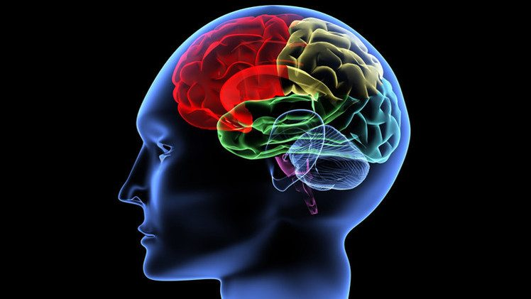 اكتشاف مواد مضرة للدماغ في اللدائن المستخدمة لحفظ المواد الغذائية