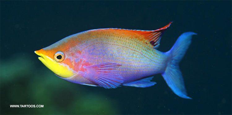 الأسماك وبذور الكتان تخفف أعراض جفاف العيون