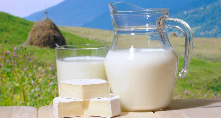 شرب الحليب يخفف من البدانة ؟