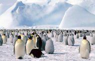 البطريق عاش قبل نحو 63 مليون سنة وكان عملاقاً