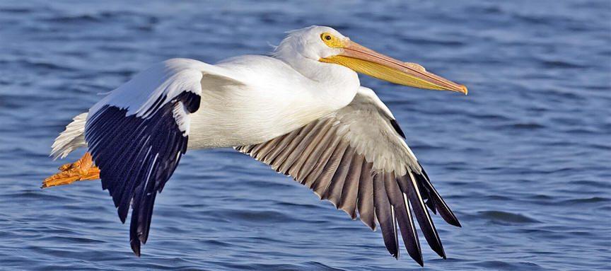 الاخلاص الزوجي عند الأسماك والبجع