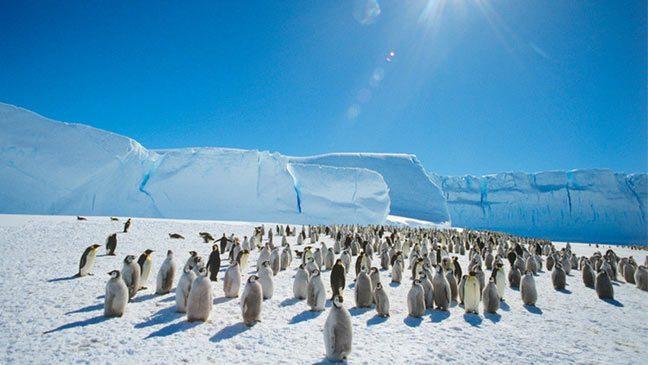 التغير المناخي ملائم جدا لطيور البطريق