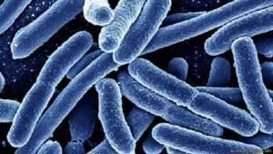 الالتهابات البكتيرية مثل بكتيريا الأمعاء (سي ديفيسيل) آخذة في الانتشار على مستوى العالم