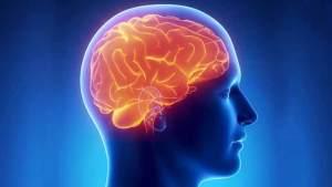 الفقر يؤثر في حجم الدماغ