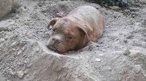 سجن عامين أو غرامة مالية لشاب يدفن كلبه حيا في ضواحي باريس
