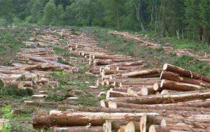 غابات الأمازون تتعرض للتدمير بوتيرة أسرع