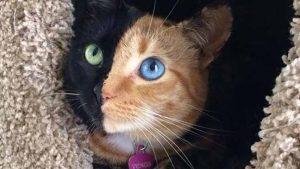القطط لا ترتبط عاطفياً بأصحابها كالكلاب