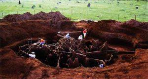 مستعمرات النمل تؤوي ملايين الأفراد وأنواعها تتجاوز العشرة آلاف