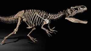 اكتشاف نوع جديد من الديناصورات ذوات الريش في اليابان