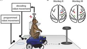كرسي متحرك يتحكم به من خلال قوة التفكير