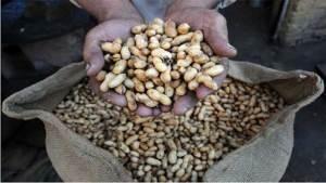 الفول السوداني يساعد على إزالة السمنة