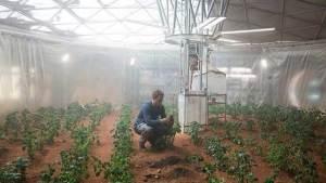 هل تنجح ناسا في زرع البطاطا على سطح المريخ؟