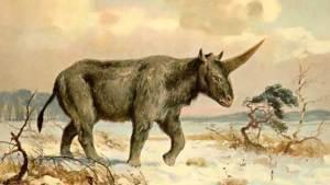 تعايش أهالي سيبيريا مع حيوان وحيد القرن
