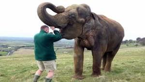 طبيب بيطري يقتلع ضرس الفيل بطريقة مذهلة