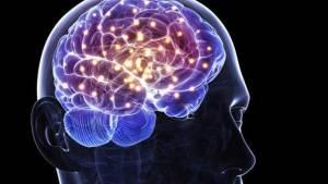 نمو المخ عند الإنسان اعتمد على السعرات الحرارية