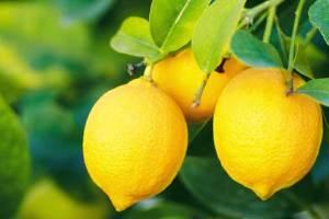 فوائد مذهلة لليمون لم تسمع عنها من قبل