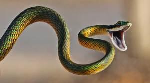 لدغة الثعابين