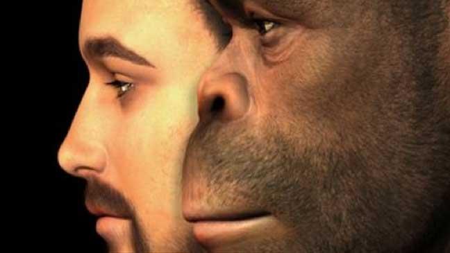 انقراض البشرية البيضاء يحدث جراء اختلاطها بالإنسان البدائي